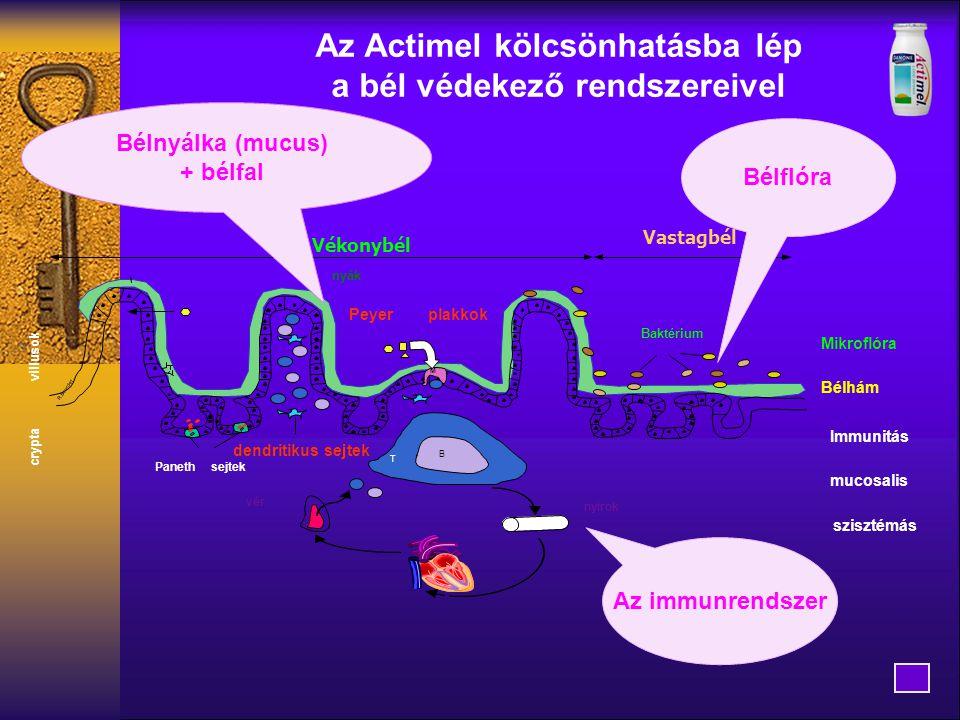 Az immunrendszer Immunitás Vékonybél villusok crypta nyák B T mucosalis szisztémás Baktérium dendritikus sejtek Peyerplakkok M Panethsejtek vér nyirok