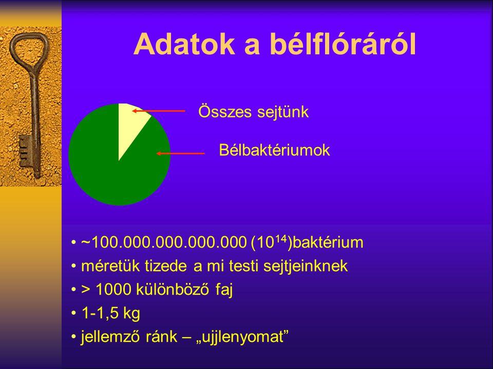 Adatok a bélflóráról Bélbaktériumok Összes sejtünk ~100.000.000.000.000 (10 14 )baktérium méretük tizede a mi testi sejtjeinknek > 1000 különböző faj