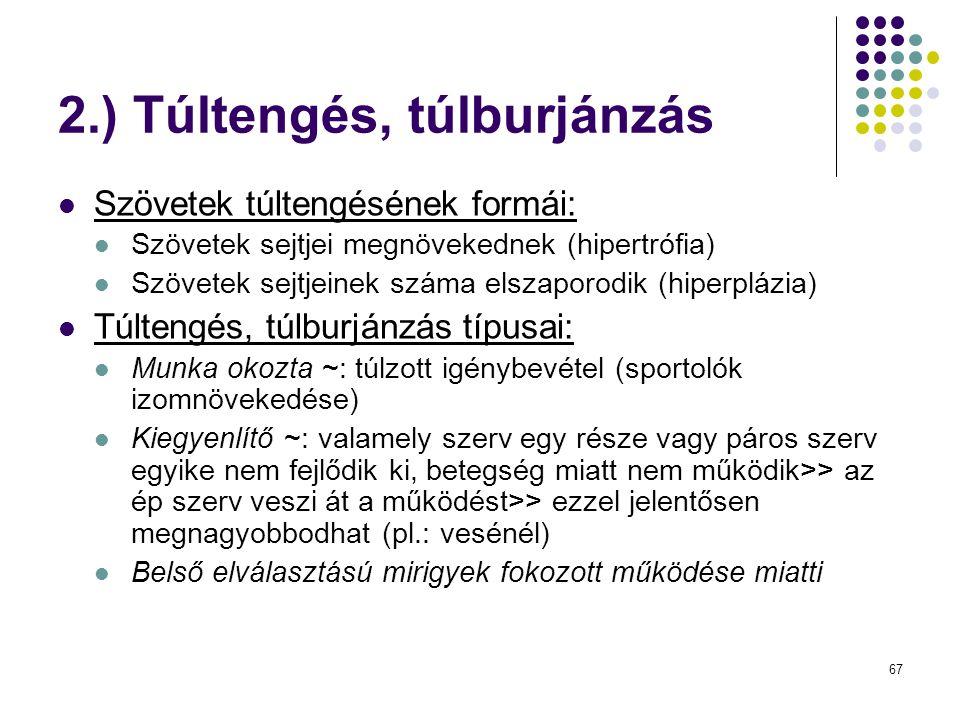 67 2.) Túltengés, túlburjánzás Szövetek túltengésének formái: Szövetek sejtjei megnövekednek (hipertrófia) Szövetek sejtjeinek száma elszaporodik (hip