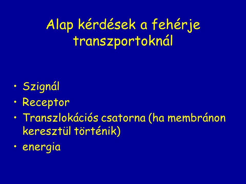 Alap kérdések a fehérje transzportoknál Szignál Receptor Transzlokációs csatorna (ha membránon keresztül történik) energia