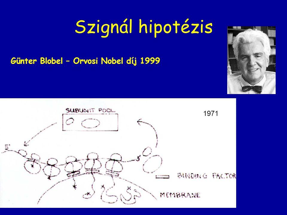 Szignál hipotézis 1971 Günter Blobel – Orvosi Nobel díj 1999