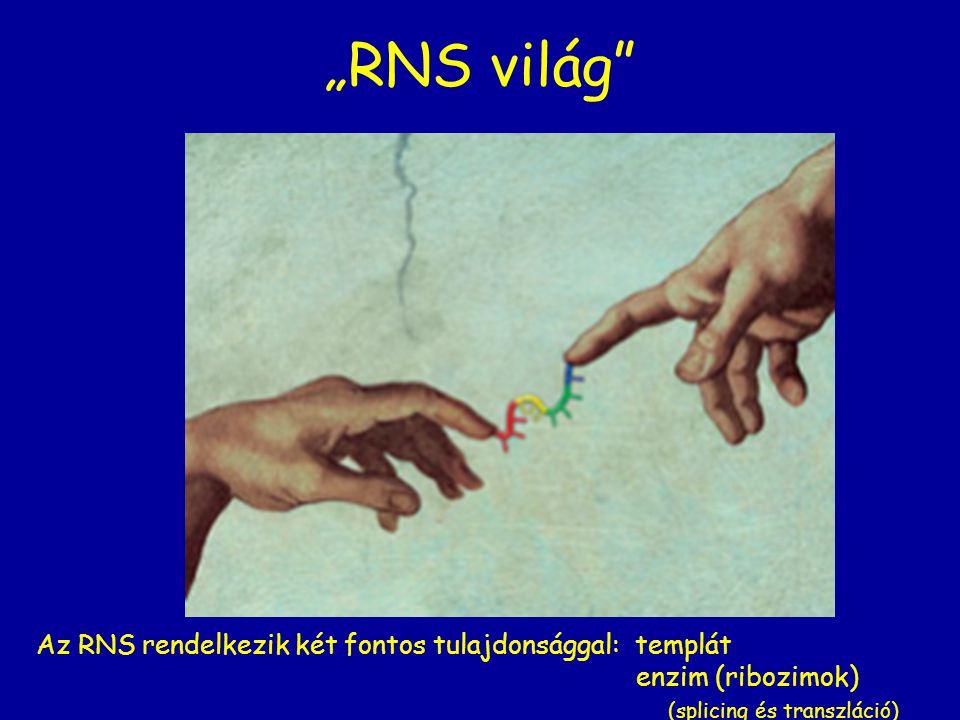 """""""RNS világ"""" Az RNS rendelkezik két fontos tulajdonsággal: templát enzim (ribozimok) (splicing és transzláció)"""