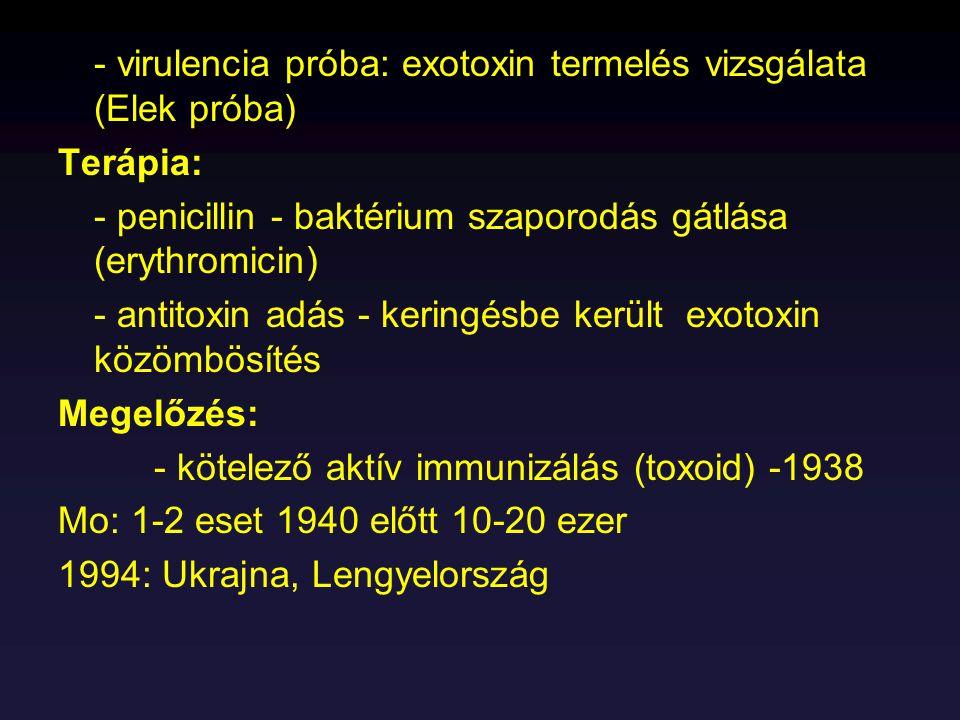 - virulencia próba: exotoxin termelés vizsgálata (Elek próba) Terápia: - penicillin - baktérium szaporodás gátlása (erythromicin) - antitoxin adás - k