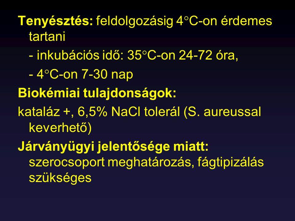 Tenyésztés: feldolgozásig 4  C-on érdemes tartani - inkubációs idő: 35  C-on 24-72 óra, - 4  C-on 7-30 nap Biokémiai tulajdonságok: kataláz +, 6,5%
