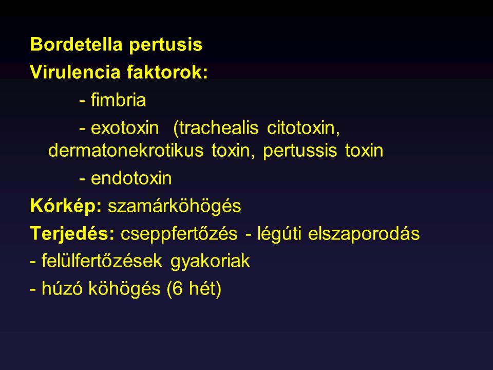 Bordetella pertusis Virulencia faktorok: - fimbria - exotoxin (trachealis citotoxin, dermatonekrotikus toxin, pertussis toxin - endotoxin Kórkép: szam