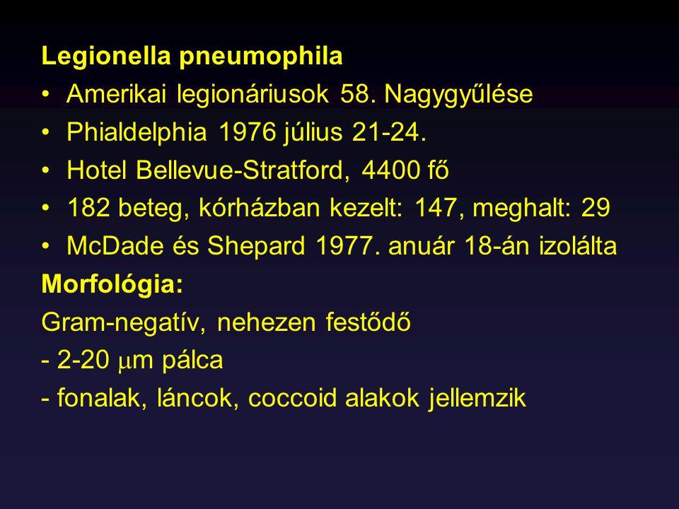 Legionella pneumophila Amerikai legionáriusok 58. Nagygyűlése Phialdelphia 1976 július 21-24. Hotel Bellevue-Stratford, 4400 fő 182 beteg, kórházban k