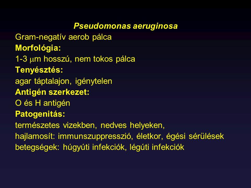 Pseudomonas aeruginosa Gram-negatív aerob pálca Morfológia: 1-3  m hosszú, nem tokos pálca Tenyésztés: agar táptalajon, igénytelen Antigén szerkezet: