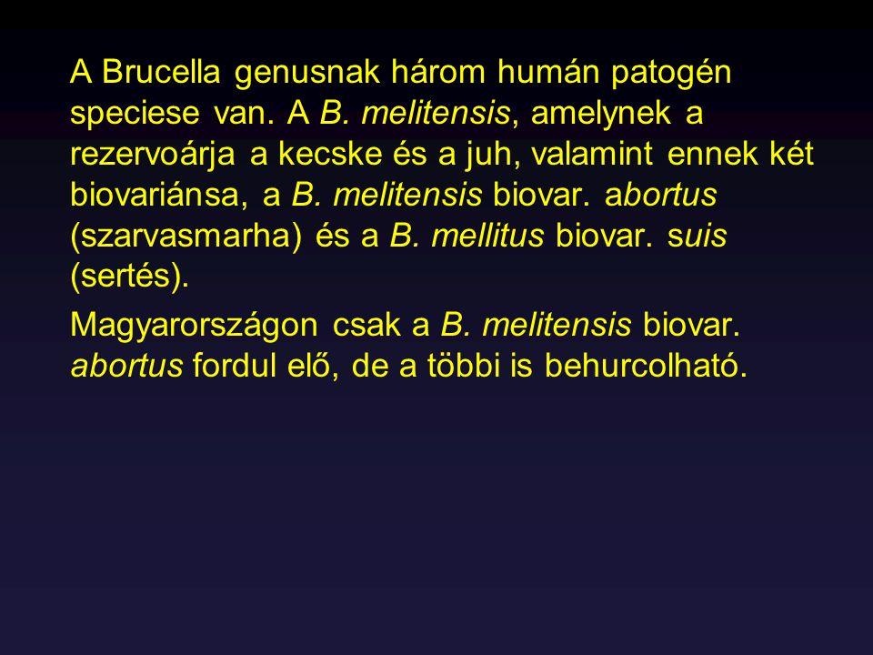 A Brucella genusnak három humán patogén speciese van. A B. melitensis, amelynek a rezervoárja a kecske és a juh, valamint ennek két biovariánsa, a B.