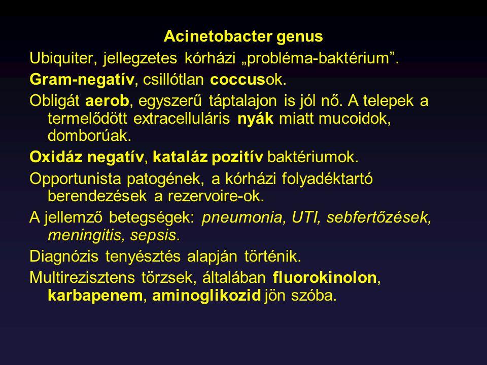 """Acinetobacter genus Ubiquiter, jellegzetes kórházi """"probléma-baktérium"""". Gram-negatív, csillótlan coccusok. Obligát aerob, egyszerű táptalajon is jól"""
