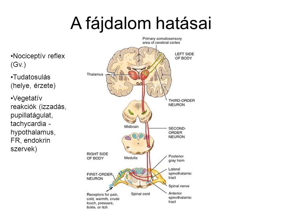 A fájdalom hatásai Nociceptív reflex (Gv.) Tudatosulás (helye, érzete) Vegetatív reakciók (izzadás, pupillatágulat, tachycardia - hypothalamus, FR, en