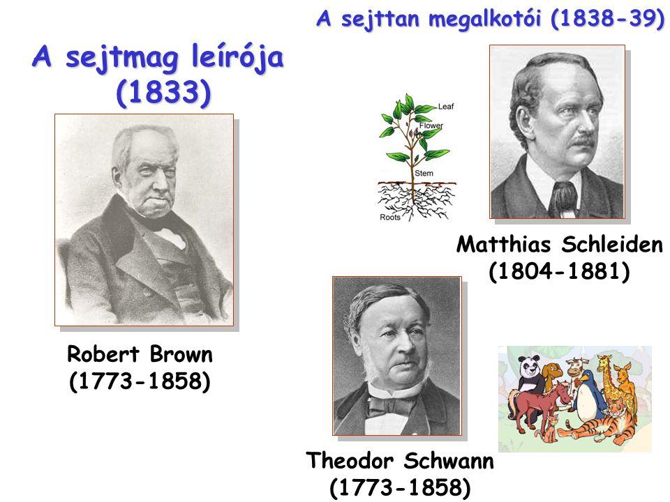 Robert Brown (1773-1858) A sejtmag leírója (1833) Theodor Schwann (1773-1858) Matthias Schleiden (1804-1881) A sejttan megalkotói (1838-39)