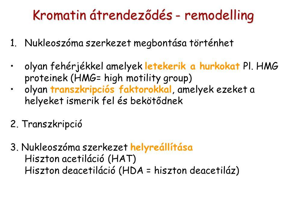 1.Nukleoszóma szerkezet megbontása történhet olyan fehérjékkel amelyek letekerik a hurkokat Pl. HMG proteinek (HMG= high motility group) olyan transzk