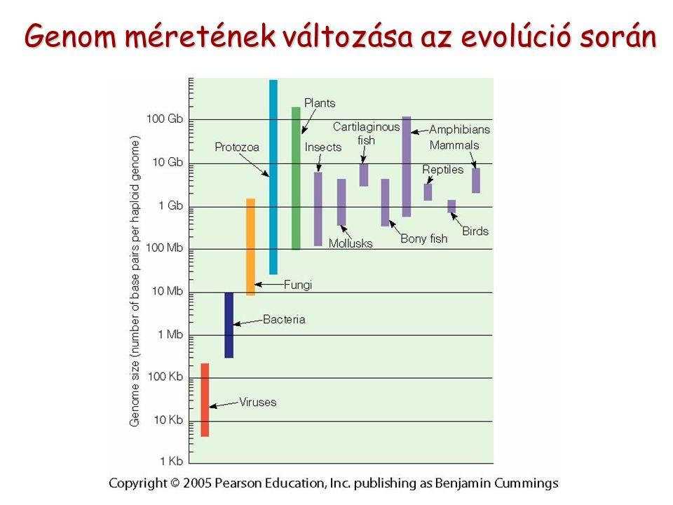Genom méretének változása az evolúció során