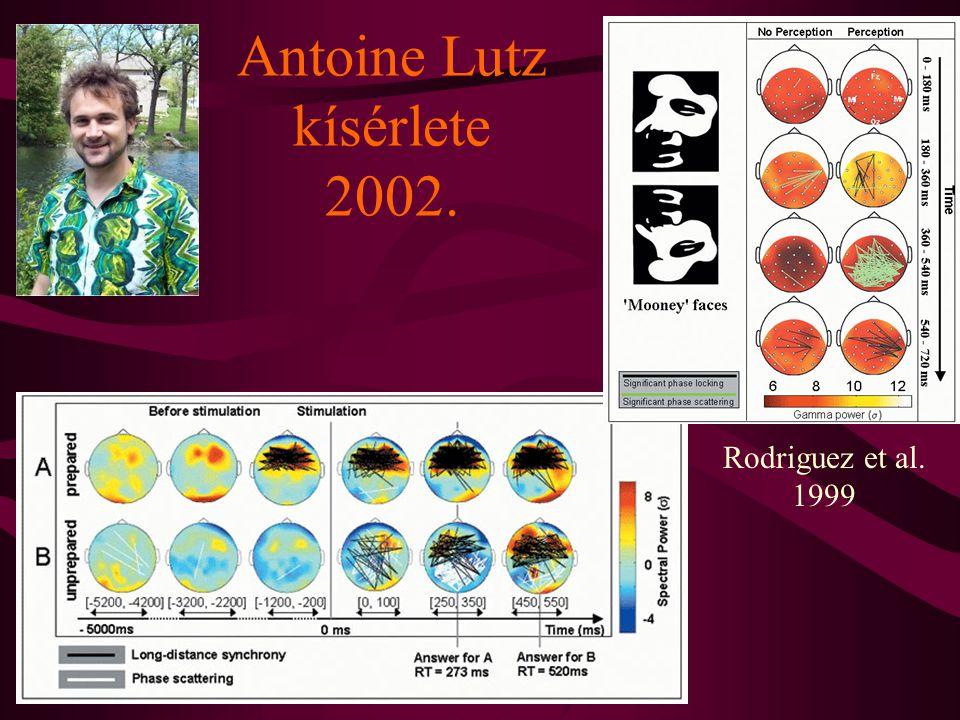Antoine Lutz kísérlete 2002. Rodriguez et al. 1999