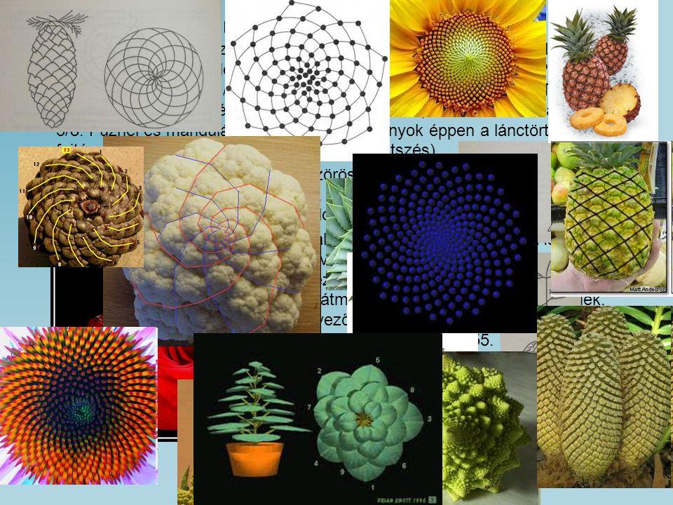 készítette: Telek Zsófia és Peti Fruzsina, Városmajori Gimnázium és Kós Károly Általános Iskola Közös megjelenésük a természetben A növények szárán az egymást követő levelek elfordulása (a phyllotaxis) többnyire, egyes becslések szerint 90%-ban F n / F n + 2 teljes kör.