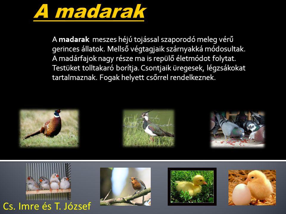 A madarak meszes héjú tojással szaporodó meleg vérű gerinces állatok.
