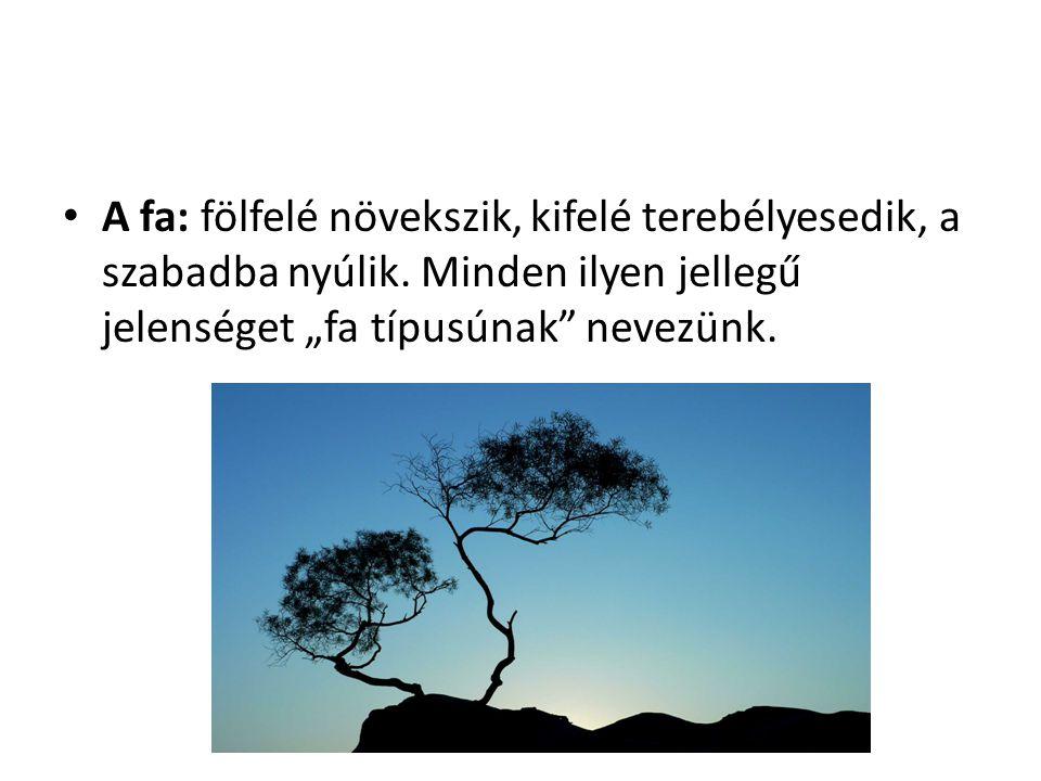 """A fa: fölfelé növekszik, kifelé terebélyesedik, a szabadba nyúlik. Minden ilyen jellegű jelenséget """"fa típusúnak"""" nevezünk."""