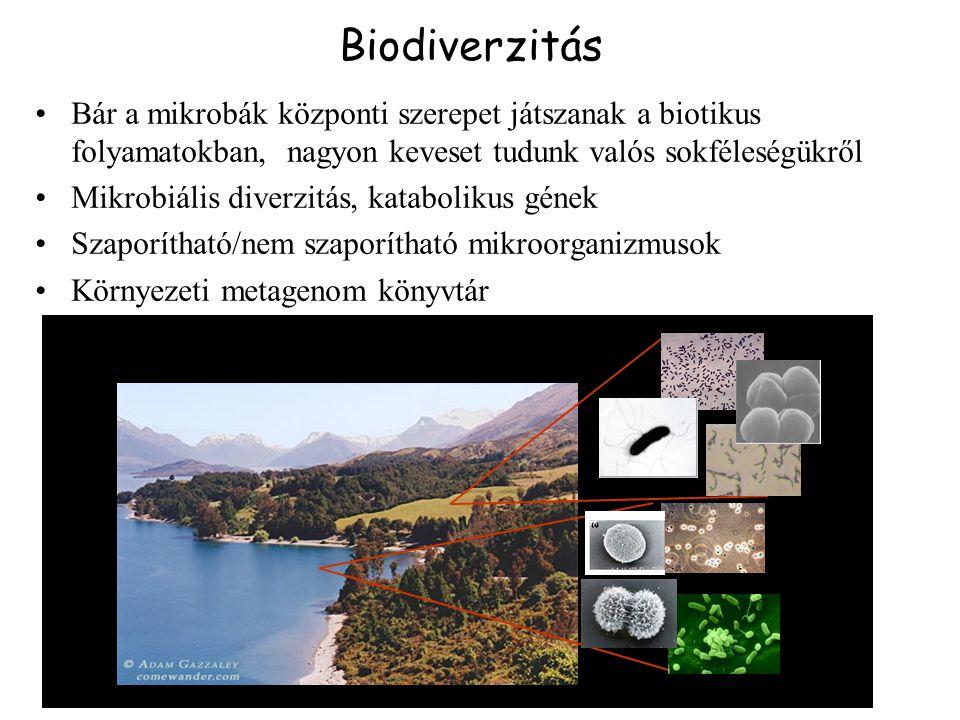 Biodiverzitás Bár a mikrobák központi szerepet játszanak a biotikus folyamatokban, nagyon keveset tudunk valós sokféleségükről Mikrobiális diverzitás, katabolikus gének Szaporítható/nem szaporítható mikroorganizmusok Környezeti metagenom könyvtár