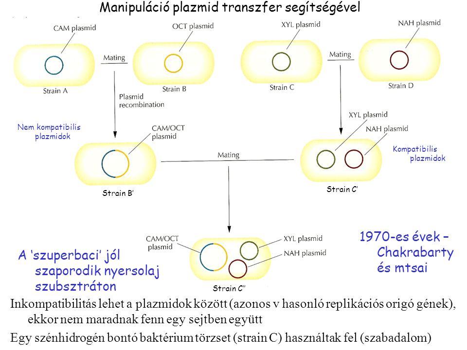 Inkompatibilitás lehet a plazmidok között (azonos v hasonló replikációs origó gének), ekkor nem maradnak fenn egy sejtben együtt Egy szénhidrogén bontó baktérium törzset (strain C) használtak fel (szabadalom) 1970-es évek – Chakrabarty és mtsai Strain B' Strain C' Kompatibilis plazmidok Nem kompatibilis plazmidok Strain C'' A 'szuperbaci' jól szaporodik nyersolaj szubsztráton Manipuláció plazmid transzfer segítségével