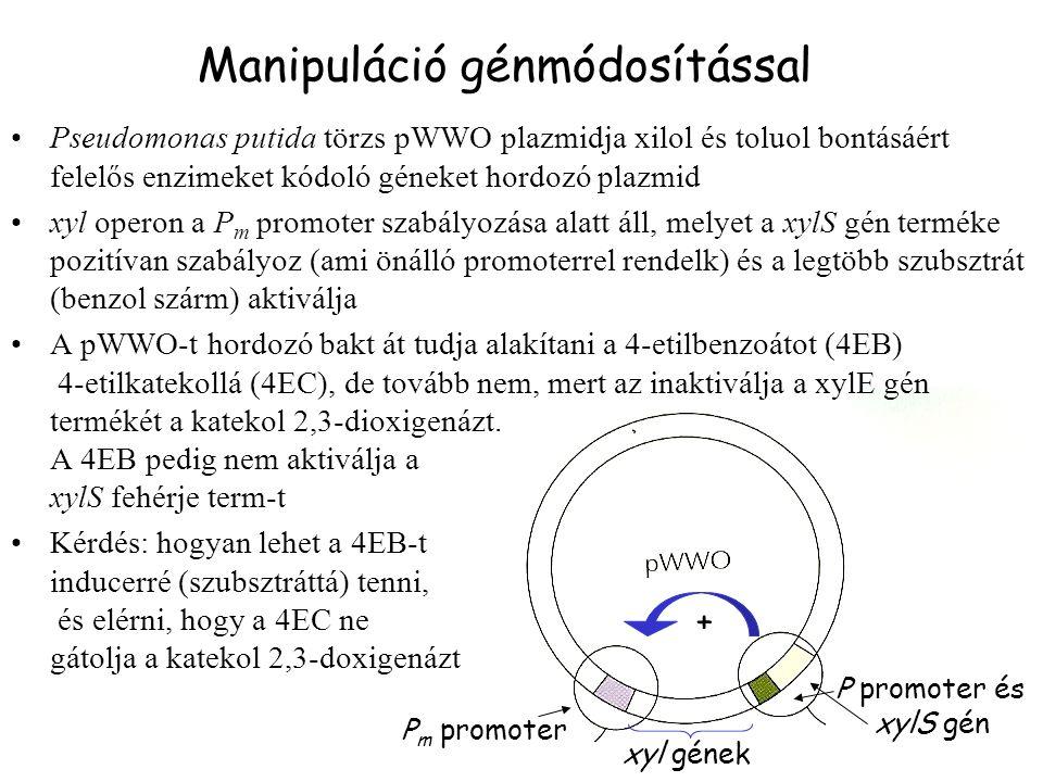 P m promoter xyl gének P promoter és xylS gén + Pseudomonas putida törzs pWWO plazmidja xilol és toluol bontásáért felelős enzimeket kódoló géneket hordozó plazmid xyl operon a P m promoter szabályozása alatt áll, melyet a xylS gén terméke pozitívan szabályoz (ami önálló promoterrel rendelk) és a legtöbb szubsztrát (benzol szárm) aktiválja A pWWO-t hordozó bakt át tudja alakítani a 4-etilbenzoátot (4EB) 4-etilkatekollá (4EC), de tovább nem, mert az inaktiválja a xylE gén termékét a katekol 2,3-dioxigenázt.