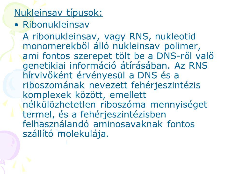 Nukleinsav típusok: Ribonukleinsav A ribonukleinsav, vagy RNS, nukleotid monomerekből álló nukleinsav polimer, ami fontos szerepet tölt be a DNS-ről v