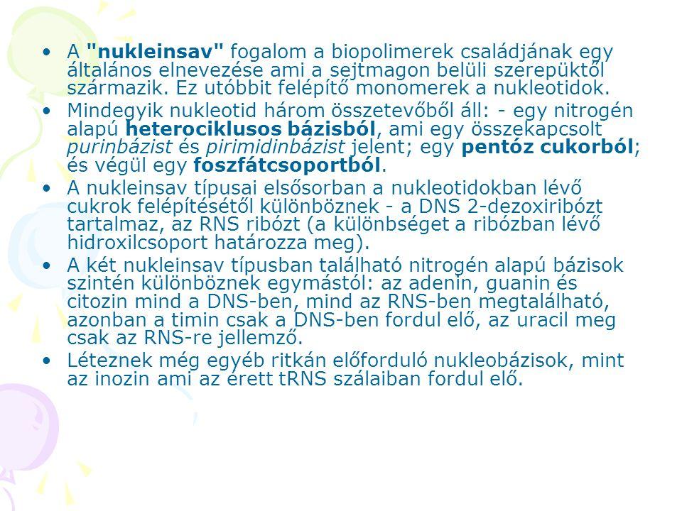 A nukleinsav fogalom a biopolimerek családjának egy általános elnevezése ami a sejtmagon belüli szerepüktől származik.