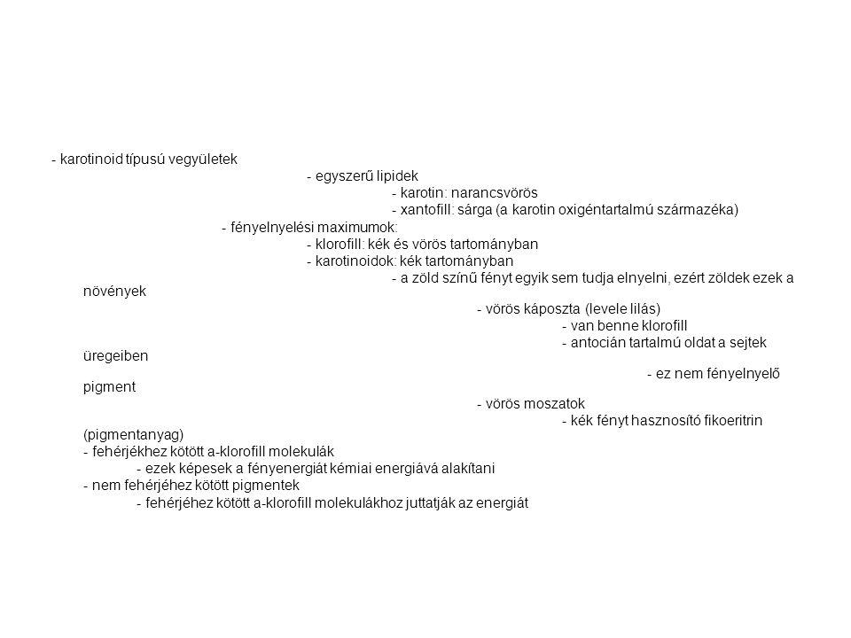 - karotinoid típusú vegyületek - egyszerű lipidek - karotin: narancsvörös - xantofill: sárga (a karotin oxigéntartalmú származéka) - fényelnyelési max