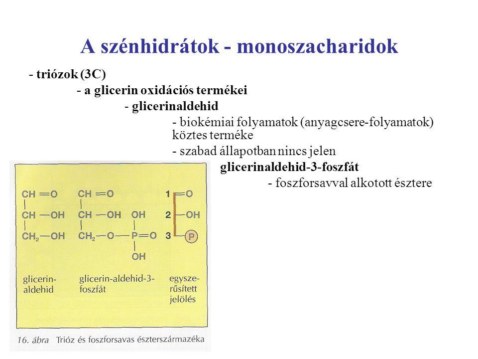 A szénhidrátok - monoszacharidok - triózok (3C) - a glicerin oxidációs termékei - glicerinaldehid - biokémiai folyamatok (anyagcsere-folyamatok) közte