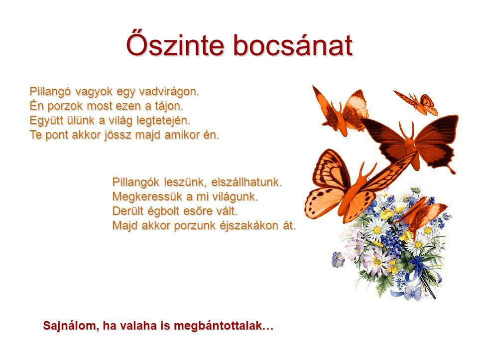 Őszinte bocsánat Pillangó vagyok egy vadvirágon. Én porzok most ezen a tájon. Együtt ülünk a világ legtetején. Te pont akkor jössz majd amikor én. Pil