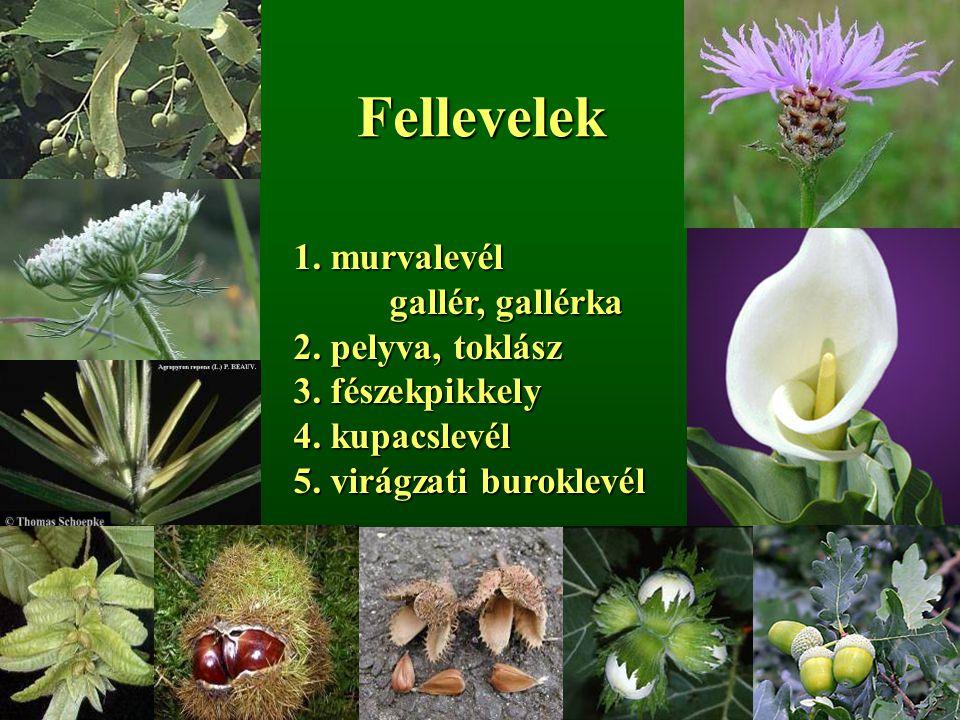 Fellevelek 1. murvalevél gallér, gallérka 2. pelyva, toklász 3. fészekpikkely 4. kupacslevél 5. virágzati buroklevél