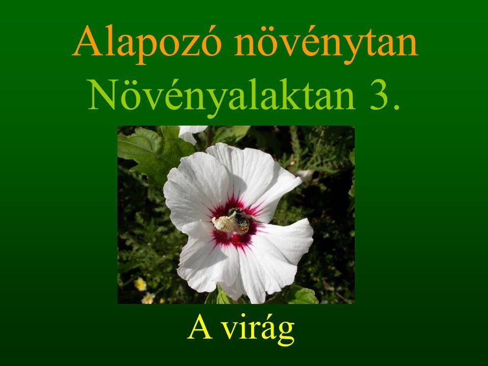 Alapozó növénytan Növényalaktan 3. A virág