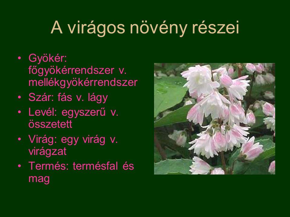 A virág részei Kocsány Virágtakaró levelek –k–különnemű Csészelevél Sziromlevél –E–Egynemű lepel Ivarlevelek: –P–Porzó→hímivarsejt –T–Termő→petesejt