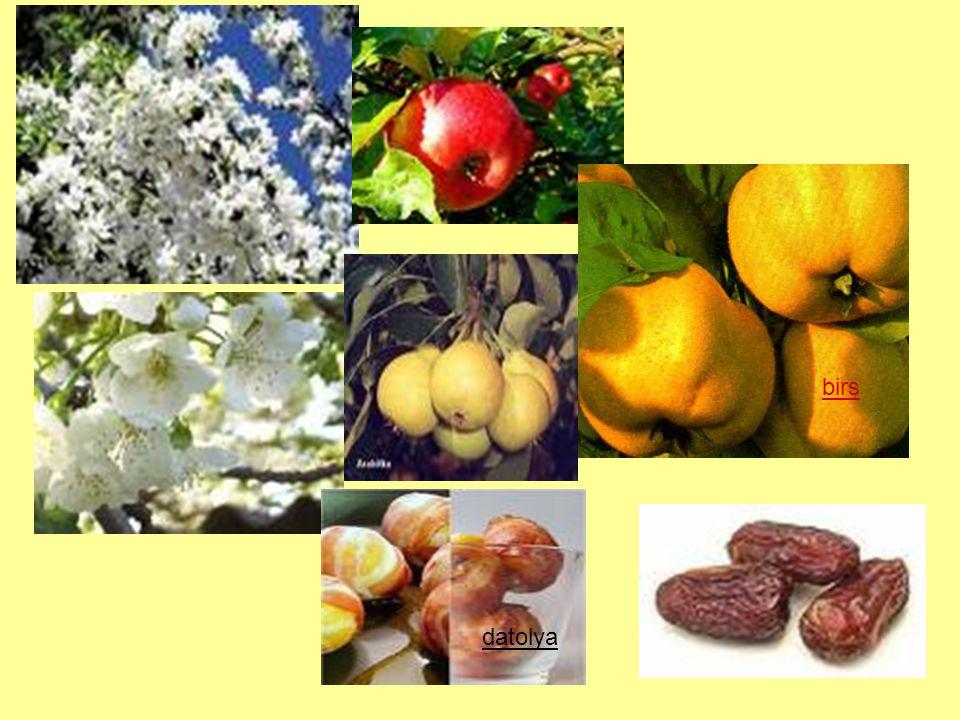 A szőlő Jellemzői: Napfényes, meleg, tápanyagban gazdag talajt szeret Gyökérzete mélyen hatol a talajba Szár: szőlőtőke A vesszőkből kacs ered (kapaszkodó szár) Virágzatából szőlőfürt fejlődik Termése: bogyó - vékony héj - lédús gyümölcshús - magvak megkülönböztetünk: csemege- és borszőlőt