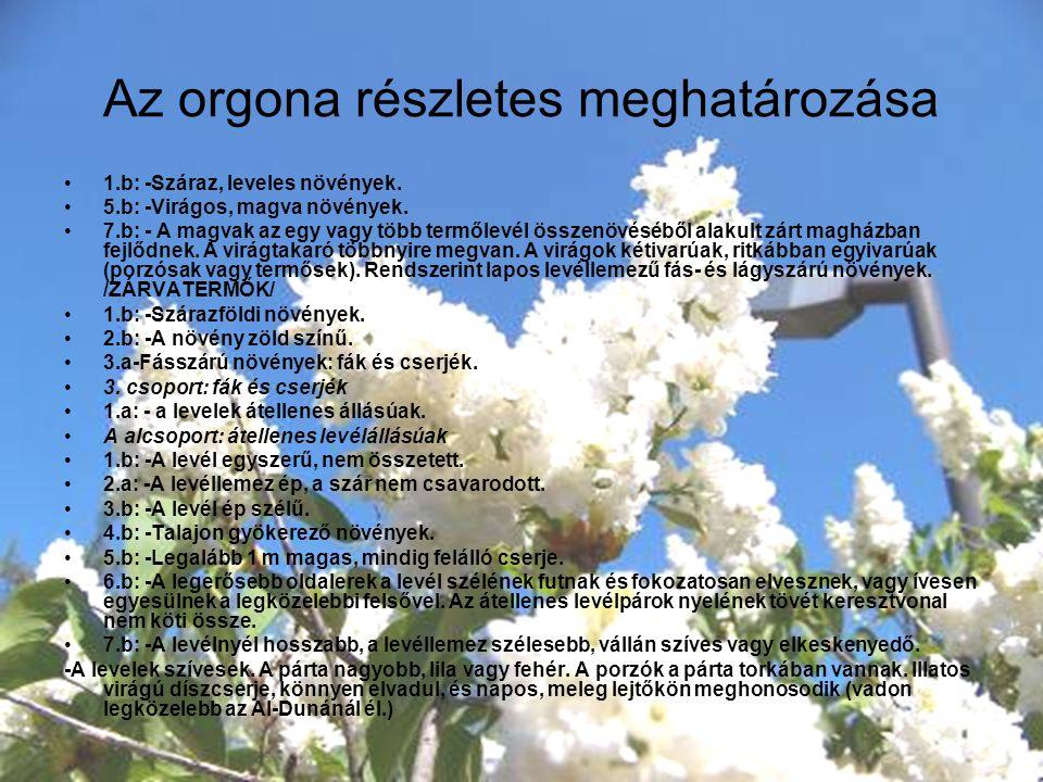 Az orgona részletes meghatározása 1.b: -Száraz, leveles növények. 5.b: -Virágos, magva növények. 7.b: - A magvak az egy vagy több termőlevél összenövé