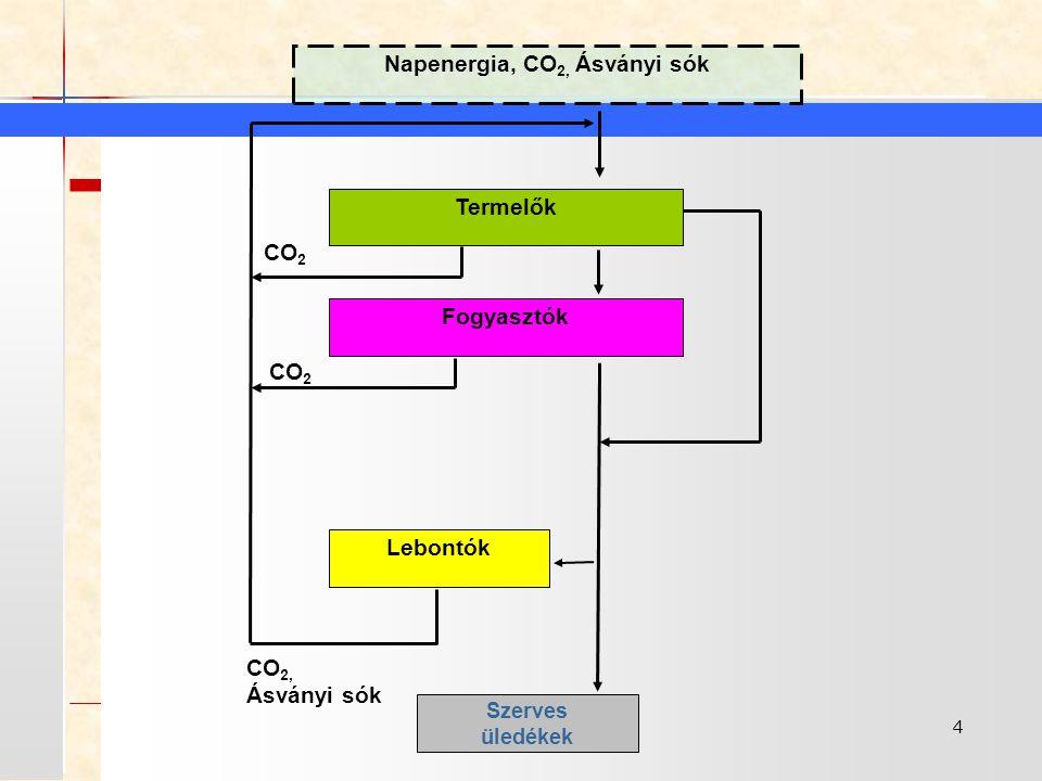 4 Napenergia, CO 2, Ásványi sók Termelők Fogyasztók Lebontók Szerves üledékek CO 2, Ásványi sók CO 2