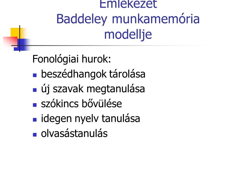 Emlékezet Baddeley munkamemória modellje Fonológiai hurok: beszédhangok tárolása új szavak megtanulása szókincs bővülése idegen nyelv tanulása olvasás