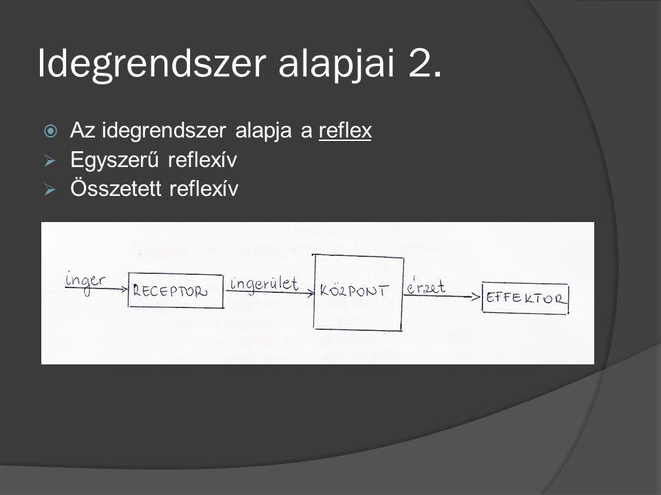 Idegrendszer alapjai 2.  Az idegrendszer alapja a reflex  Egyszerű reflexív  Összetett reflexív
