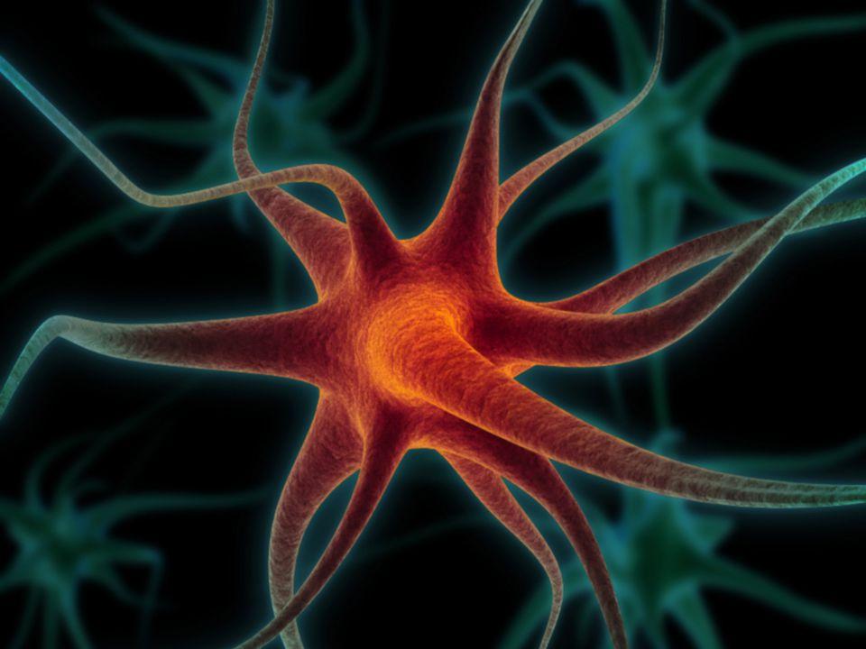 Idegrendszer alapjai 3.  Az idegrendszer működési egysége az idegsejt = neuron  Részei: