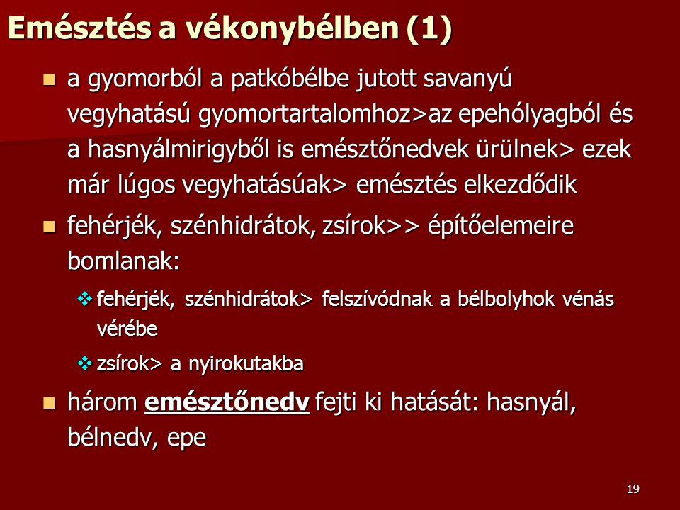 19 Emésztés a vékonybélben (1) a gyomorból a patkóbélbe jutott savanyú vegyhatású gyomortartalomhoz>az epehólyagból és a hasnyálmirigyből is emésztőne