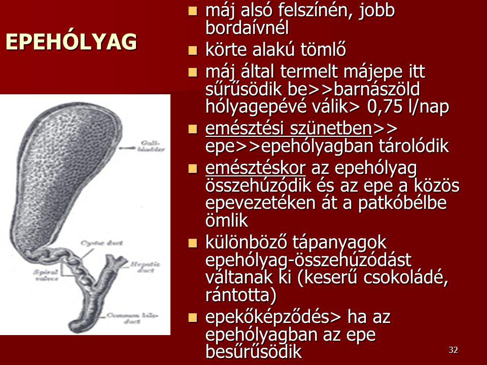 32 EPEHÓLYAG máj alsó felszínén, jobb bordaívnél máj alsó felszínén, jobb bordaívnél körte alakú tömlő körte alakú tömlő máj által termelt májepe itt