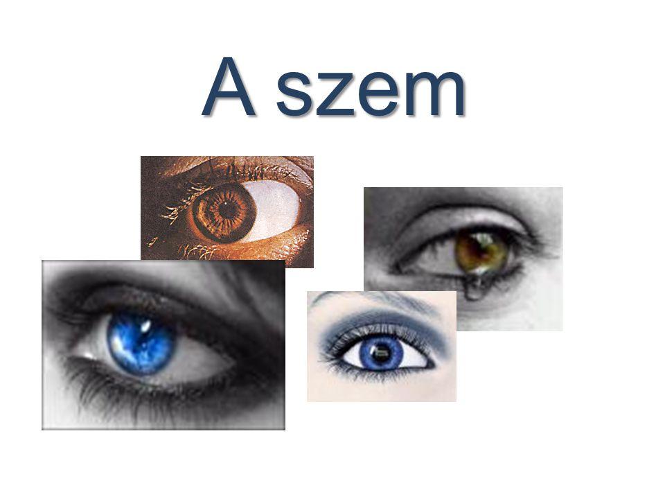 Szemhibák Rövidlátás (miopia) Távollátás (hipermetropia) Asztigmatizmus Daltonizmus Farkasvakság (hemeralopia)