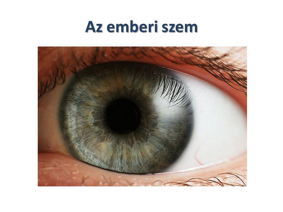 A látás analizátora részei: Járulékos szervek: -szemöldök -szempillák -szemhéjak -könnymirigyek Szemgolyó -ingere a 400 – 760 nm hullámhosszú fény -sötétkamra szem -a környezetből érkező információ 80%-t érzékeli