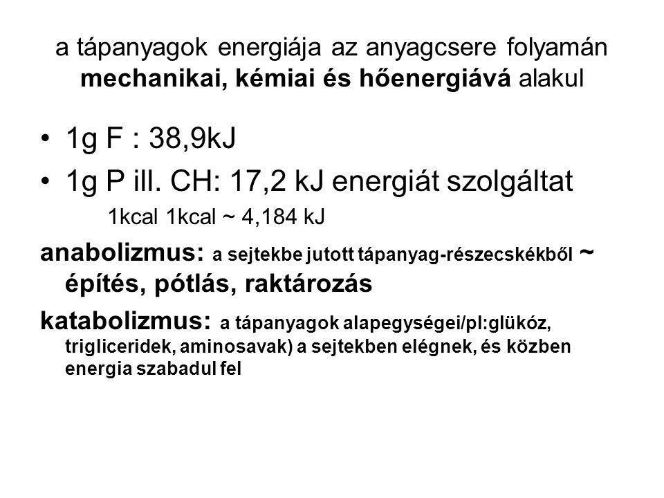 a tápanyagok energiája az anyagcsere folyamán mechanikai, kémiai és hőenergiává alakul 1g F : 38,9kJ 1g P ill.
