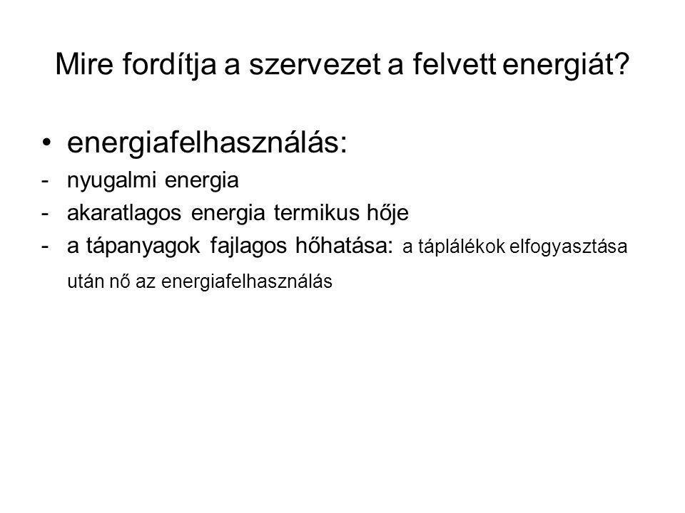 Mire fordítja a szervezet a felvett energiát.