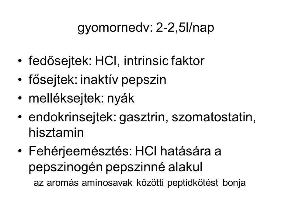 gyomornedv: 2-2,5l/nap fedősejtek: HCl, intrinsic faktor fősejtek: inaktív pepszin melléksejtek: nyák endokrinsejtek: gasztrin, szomatostatin, hisztamin Fehérjeemésztés: HCl hatására a pepszinogén pepszinné alakul az aromás aminosavak közötti peptidkötést bonja