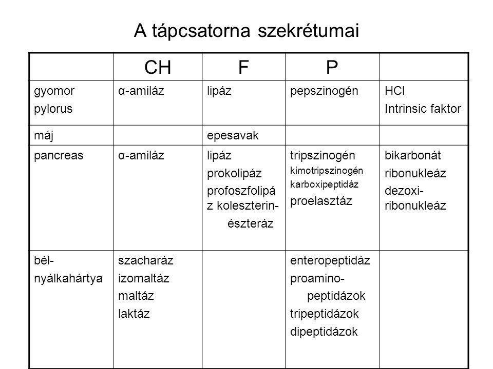 A tápcsatorna szekrétumai CHFP gyomor pylorus α-amilázlipázpepszinogénHCl Intrinsic faktor májepesavak pancreasα-amilázlipáz prokolipáz profoszfolipá z koleszterin- észteráz tripszinogén kimotripszinogén karboxipeptidáz proelasztáz bikarbonát ribonukleáz dezoxi- ribonukleáz bél- nyálkahártya szacharáz izomaltáz maltáz laktáz enteropeptidáz proamino- peptidázok tripeptidázok dipeptidázok