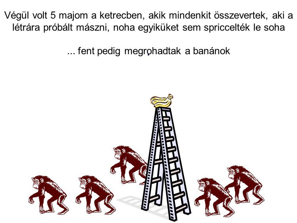 Végül volt 5 majom a ketrecben, akik mindenkit összevertek, aki a létrára próbált mászni, noha egyiküket sem spriccelték le soha... fent pedig megroha
