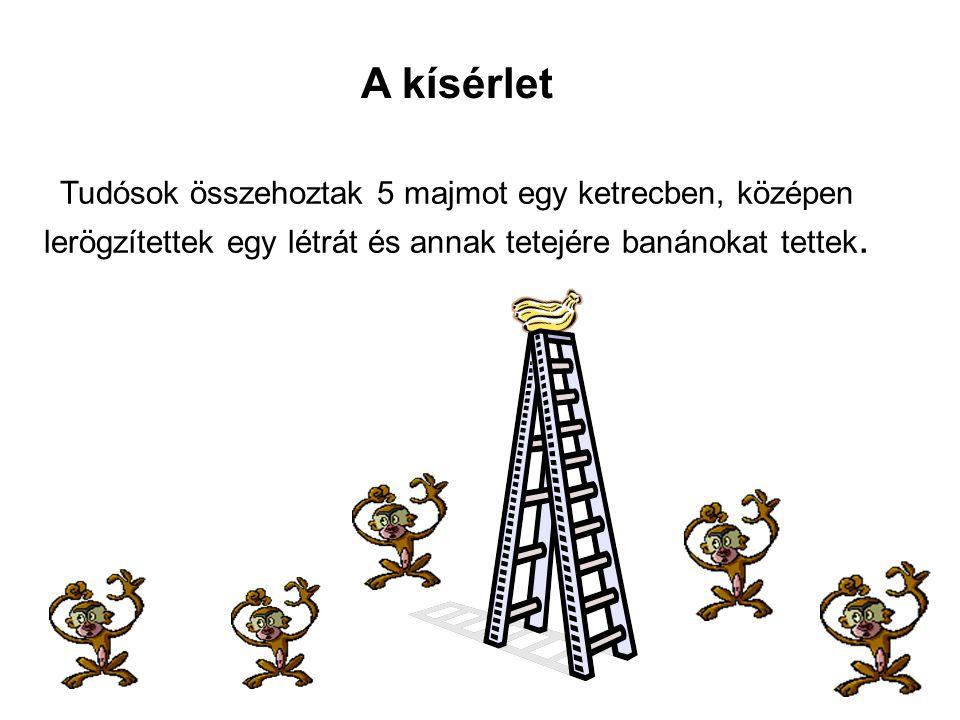 Tudósok összehoztak 5 majmot egy ketrecben, középen lerögzítettek egy létrát és annak tetejére banánokat tettek. A kísérlet