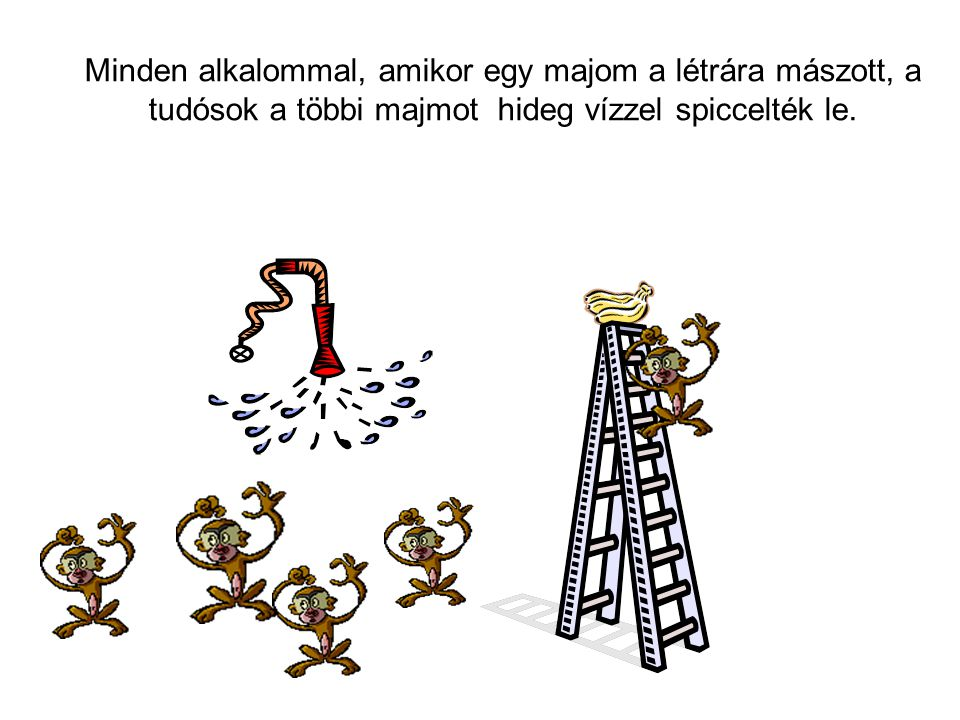 Minden alkalommal, amikor egy majom a létrára mászott, a tudósok a többi majmot hideg vízzel spiccelték le.
