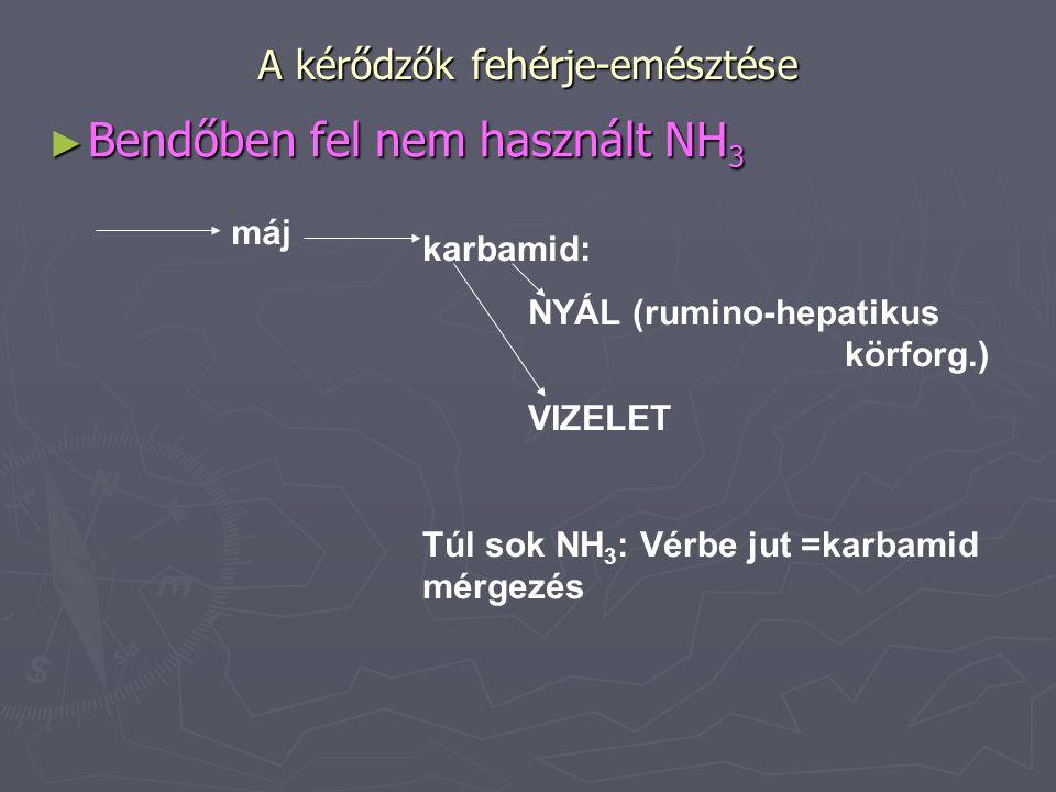 A kérődzők fehérje-emésztése ► Bendőben fel nem használt NH 3 máj karbamid: NYÁL (rumino-hepatikus körforg.) VIZELET Túl sok NH 3 : Vérbe jut =karbami